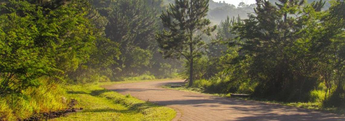 Parque Jequitibá, criado há 13 anos, foi aberto mas ainda não está pronto
